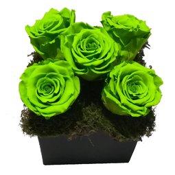 Aranjament 5 trandafiri nemuritori verzi