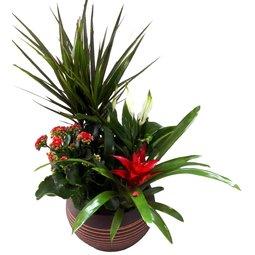 Aranjament cu plante perene