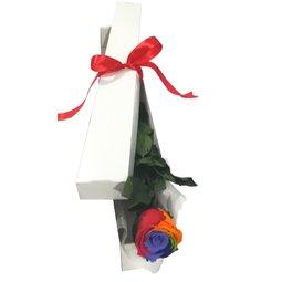 Cutie 1 trandafir curcubeu conservat