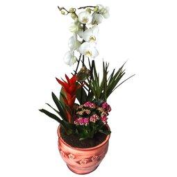 Orhidee alba si alte plante perene