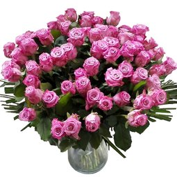 Pasiune pentru roze mov