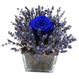 Trandafir nemuritor albastru