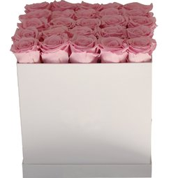 Trandafiri nemuritori roz