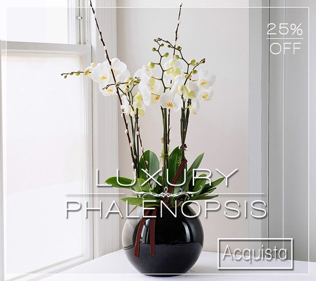 Luxury Phalenopsis