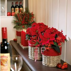Red Poinsettia | Christmas Plants Delivery | Milan Local Florist