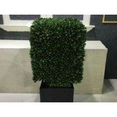 Green Square Boxwood, 94CM