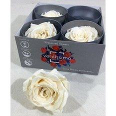 Ivory Preserved Premium Roses, 4pcs
