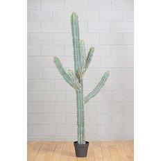 Pianta di Cactus, 210CM