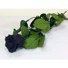 Preserved Rose, Black