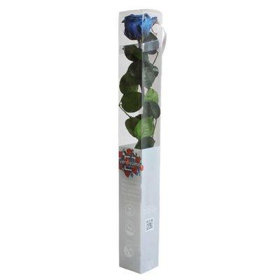 Rosa Amorosa Stabilizzata Blu Scuro Slavato