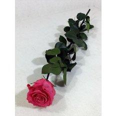 Rosa Amorosa Stabilizzata Fucsia